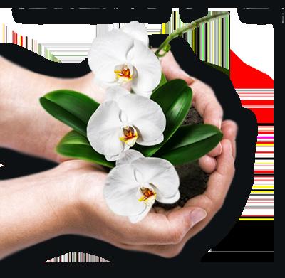 mani con fiori