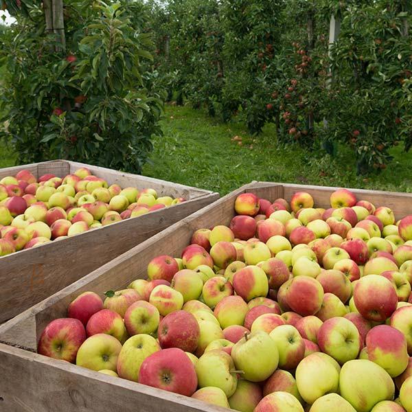 Migliorare la produttività delle colture