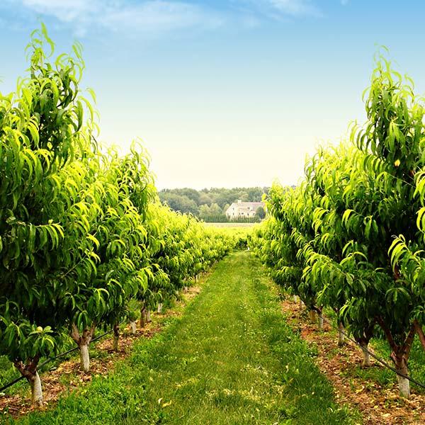 Migliorare lo sviluppo e la vitalità delle piante