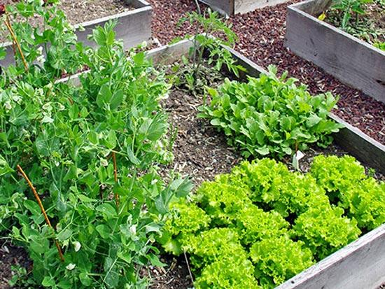 Nell'orto o in giardino