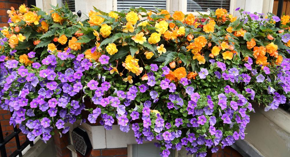 Scegliere i fiori