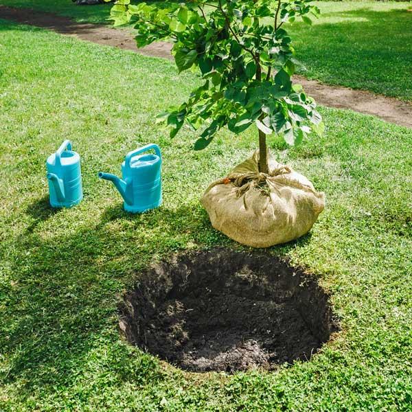 Scegliere e piantare gli alberi da frutto