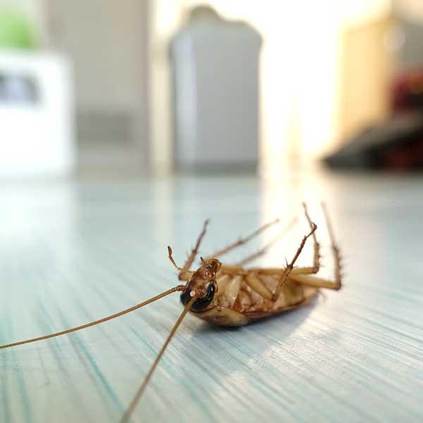 Stop agli insetti domestici