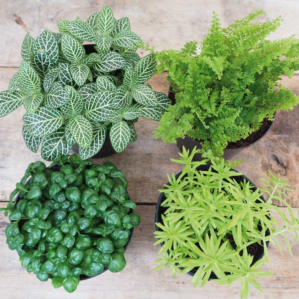 verde in casa