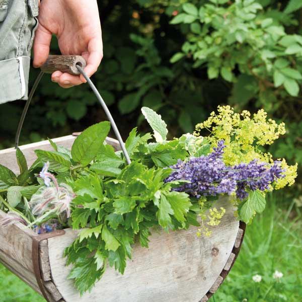 Coltivare le piante del benessere