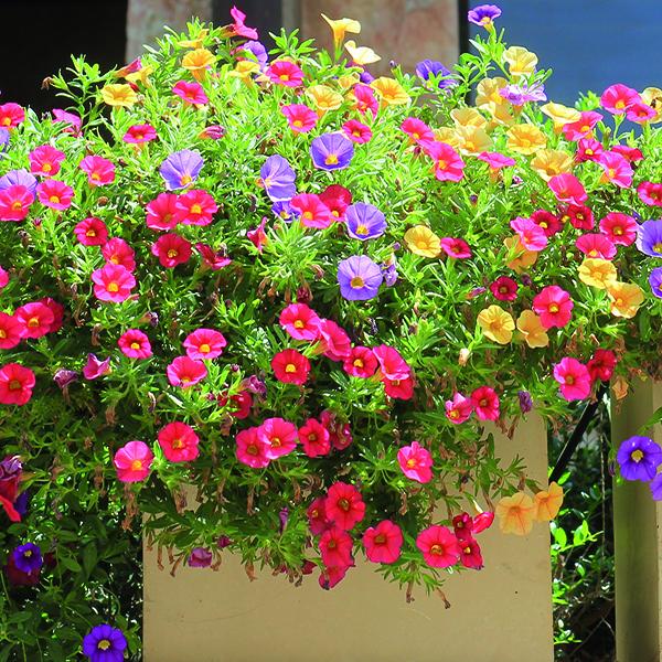Dry garden, le piante che non hanno sete