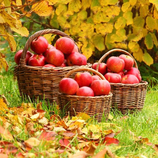 Piante da frutto autunnali