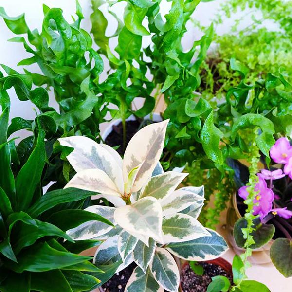I rinvasi delle piante da interno