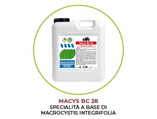 macys-bc-28