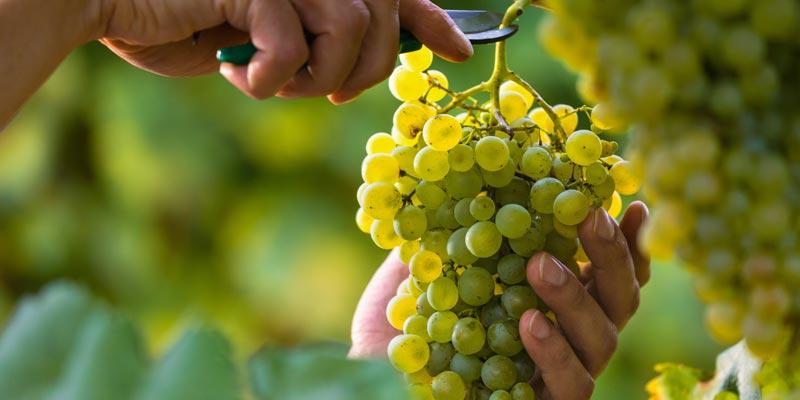 qualita-in-viticoltura