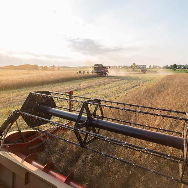 Frumento e Mais, basi dell'agroalimentare italiano