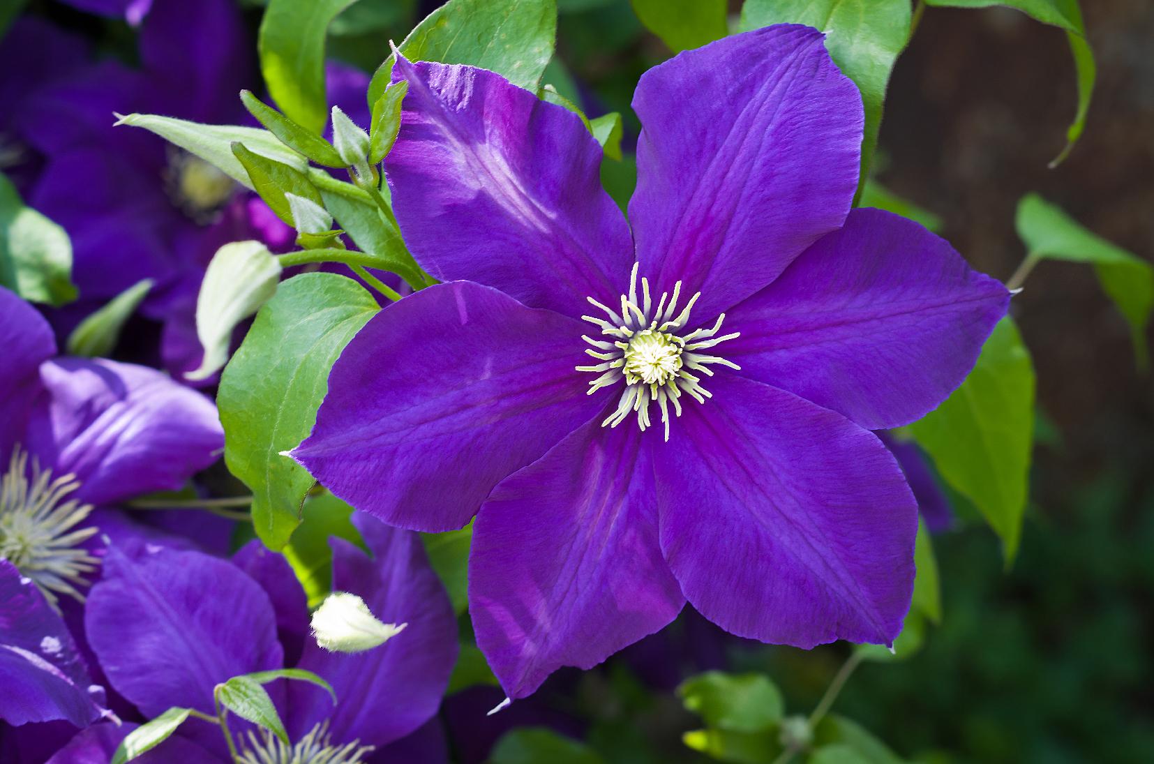 Fiori Da Balcone Ombra 6 fiori da balcone all'ombra e al sole - cifo