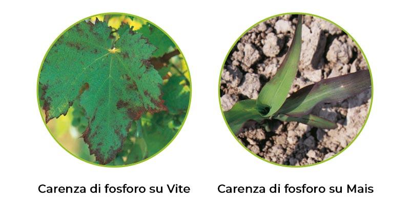 il-fosforo-in-agricoltura