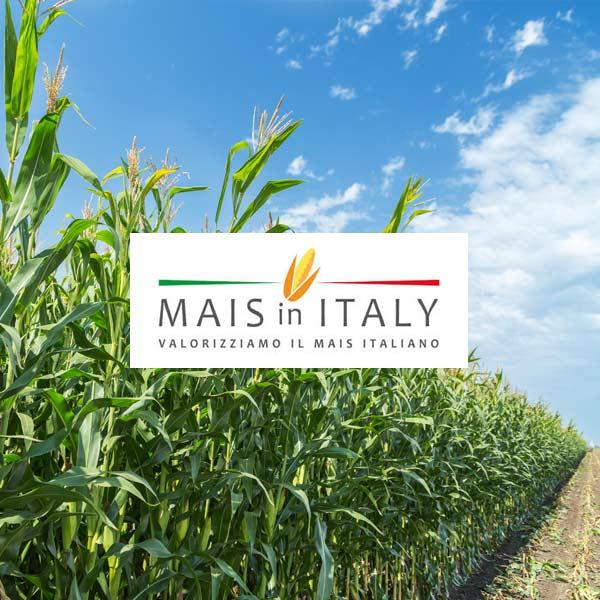 Cifo a Mais in Italy 2019