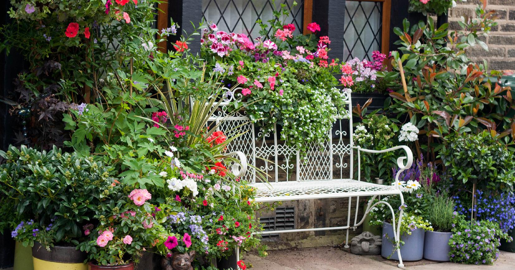 5 piante da balcone o terrazzo resistenti al caldo