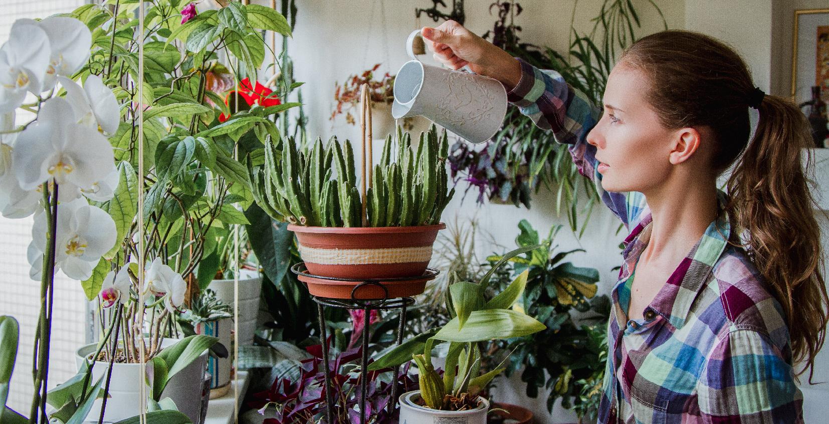 Come curare le piante prima di andare in vacanza