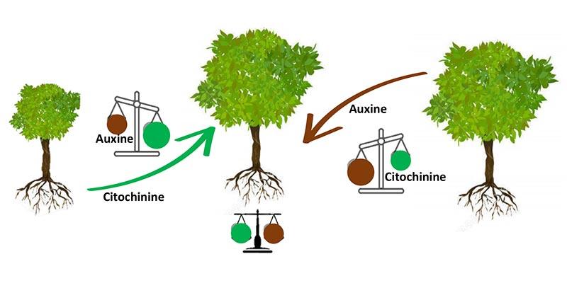 comunicazione-radici-pianta