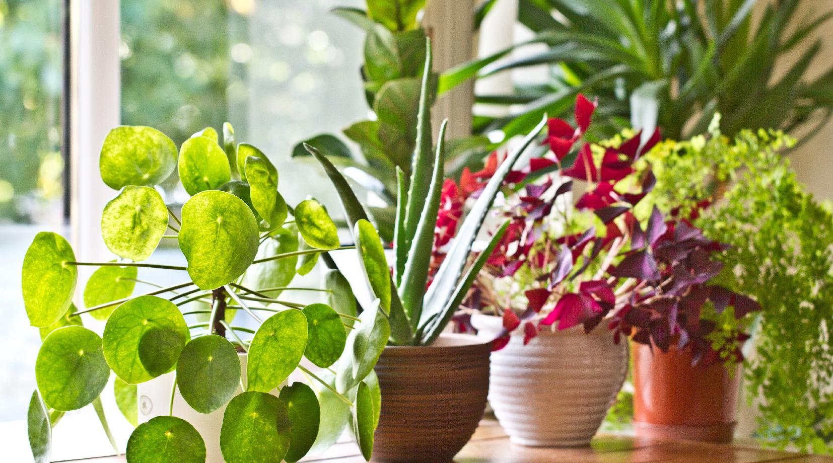 Piante Tropicali Da Interno lo stile urban jungle: quali piante tropicali da interno